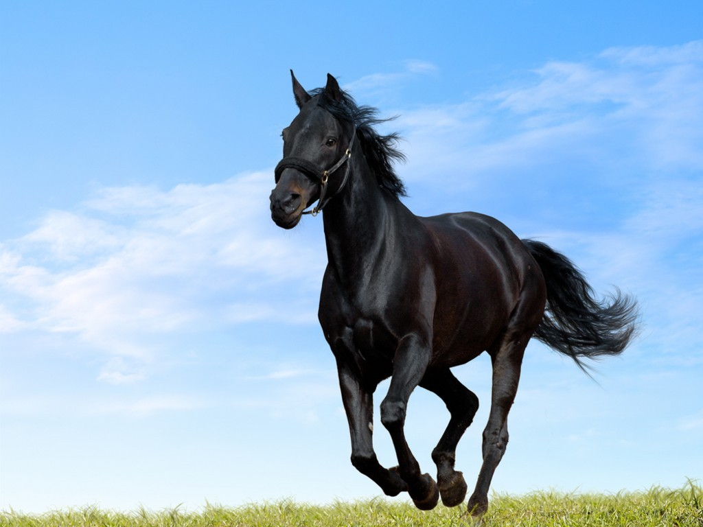 Popular Wallpaper Horse Ultra Hd - black_horse  2018_465140.jpg