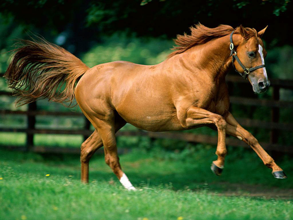 Advanced Biological Concepts - Equine