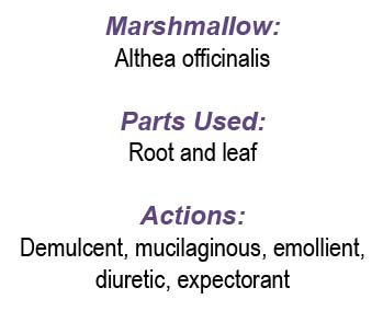 Marshmallow Plant Uses