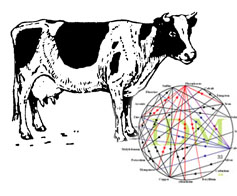 Cow and Mineral Wheel